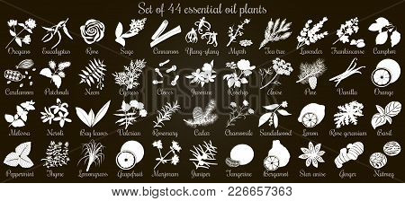 Big Vector Set Of 44 Flat Style Essential Oil Plants. White Silhouettes On Black. Eucalyptus, Jasmin