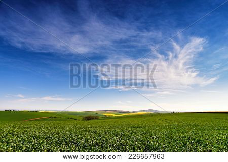 Spring Farmland On Hills. Green And Yellow Spring Fields.