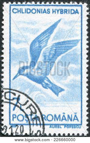 Romania - Circa 1991: A Stamp Printed In The Romania, Shows The Whiskered Tern (chlidonias Hybridus)