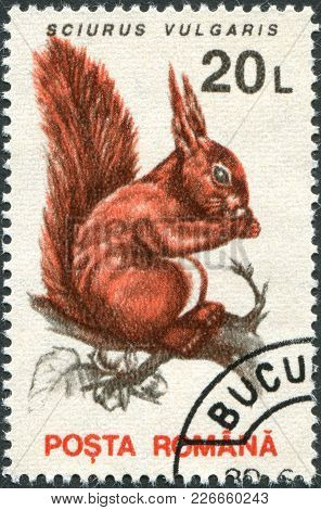 Romania - Circa 1993: A Stamp Printed In The Romania, Shows The Eurasian Red Squirrel (sciurus Vulga