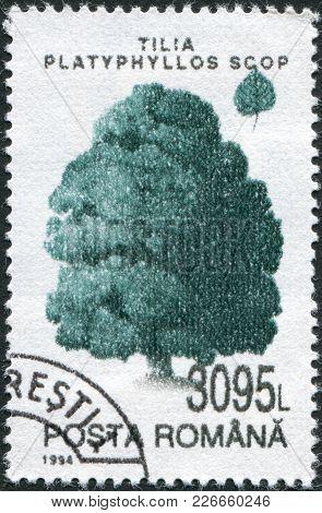 Romania - Circa 1994: A Stamp Printed In The Romania, Shows Tilia Platyphyllos, Circa 1994