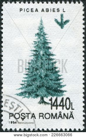 Romania - Circa 1994: A Stamp Printed In The Romania, Shows The Norway Spruce (picea Abies), Circa 1