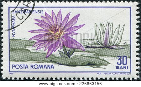Romania - Circa 1965: A Stamp Printed In The Romania, Dedicated To 45th Anniversary Of The Botanical