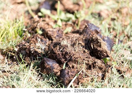 Horse Dung . In The Park In Nature
