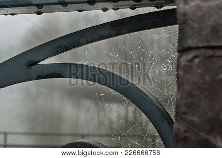Wet Spiderweb On A Metal Railing, Blurry Trees Background