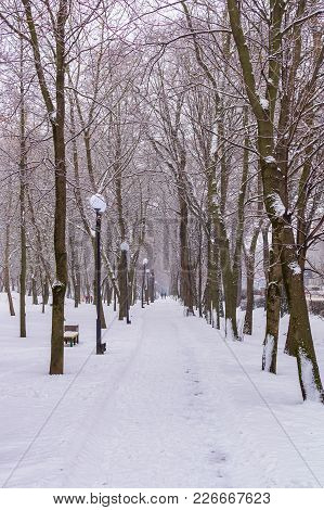 Alley Of Trees In The Park, White Snow, Winter, Cold.