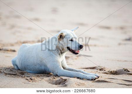 Lovely dog on Jimbaran Beach in Bali