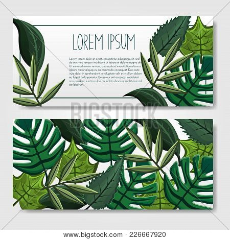 Vector Abstract Colorful Banner Or Invitation Cards Or Voucher, Sale With Green Different Leaves, Tr