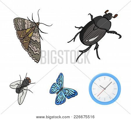Arthropods Insect Beetle, Moth, Butterfly, Fly. Insects Set Collection Icons In Cartoon Style Vector