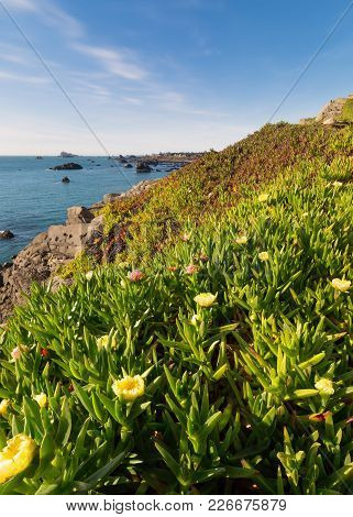 Ocean View Over Iceplant Flowers, Northern California, Color Image