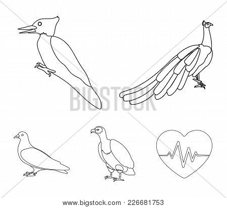 Peacock, Woodpecker And Various Species. Birds Set Collection Icons In Outline Style Vector Symbol S