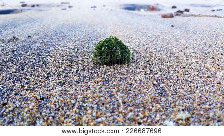 Sea Grass In The Sand Of The Beach