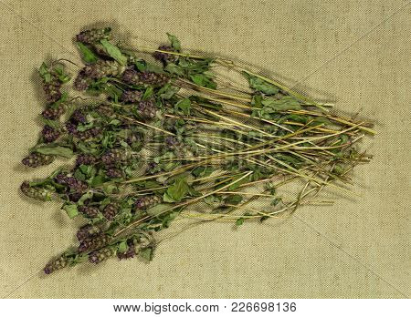 Prunella Vulgaris. Dry Herbs For Use In Alternative Medicine, Phytotherapy, Spa, Herbal Cosmetics. P