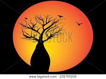 Boab Tree With Moon And Birds Flying Around  The Tree