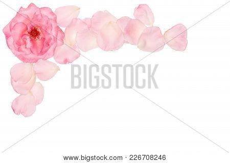 Natural Flower Set. Beautiful Floral Clip Art. Elegant Floral Frame, Border, Header, Corner. Rose Pi