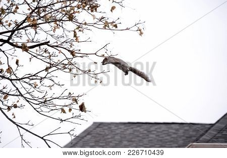 Squirrel Leaps From Rooftops To Tree Branches