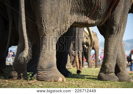 A Herd Of Elephants Closeup. Raised Elephant