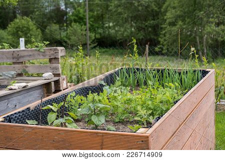 Planted Raised Bed Of Wood In Spring With Sprouting Vegetables