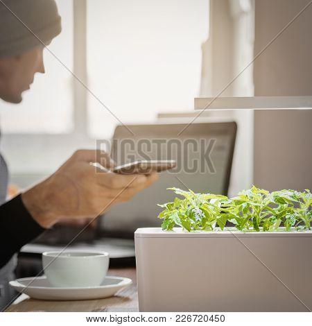 Man Using Smart Remote To Control Growth Of Plant On Work Place With Laptop And Cup Of Coffee