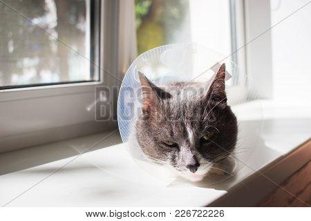 Pathetic Cute Sick Grey Cat Transparent E-collar Patient Window