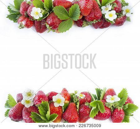 Ripe Strawberries Isolated On A White. Strawberries At Border Of Image With Copy Space For Text. Top