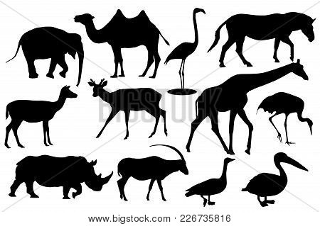 Wild Animals And Birds. Black Silhouette Icons. Vector Illustration Isolated On White Background