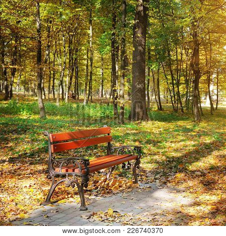 Beautiful Autumn Park With Paths And Benches. Bright Yellow Leaves And A Bench Illumination By Solar