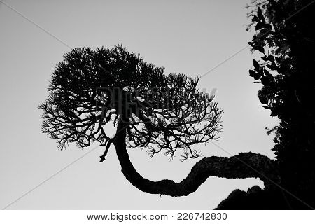 The Tree Of Life Is A Bonsai Growing Sideways