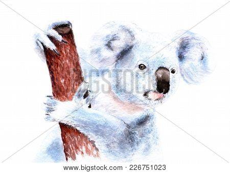 Watercolor Drawing Of A Koala On A Tree