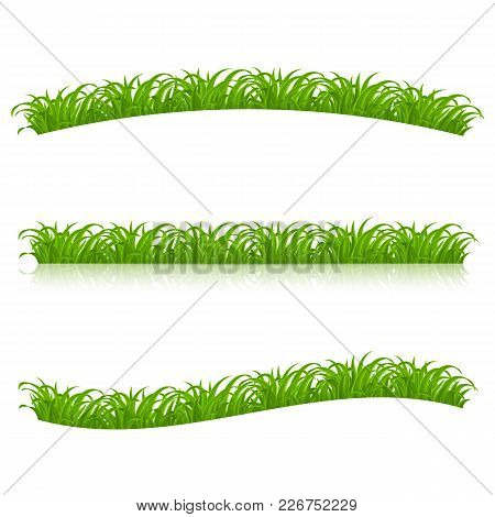 Set Of Green Grass For Spring Or Nature Design. Illustration On White Background