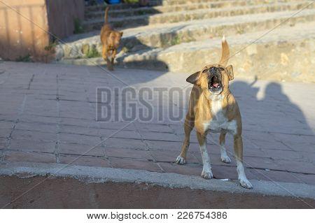 A Non-pedigree Dog. Congenital Dog Concept: Survive In Difficult Conditions, Lack Of Shelter, Loneli