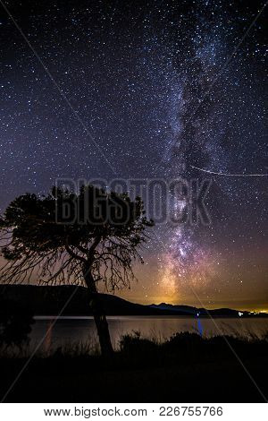 Milky Way Rises Over The Tree In Porto Germeno,greece.