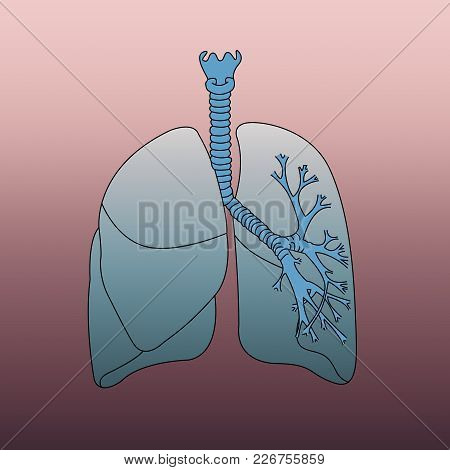Respiratory System Infographic On Red Background To Understand A Concept Of Research And Study