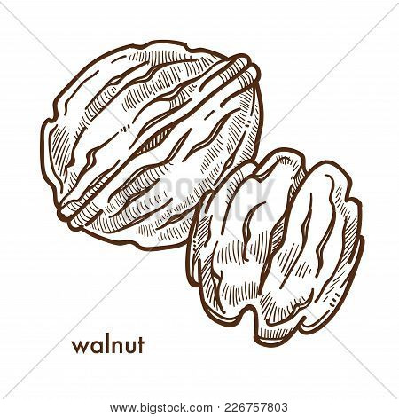 Healthy Delicious Walnut In Hard Shell And Peeled. Useful Nut Full Of Vitamins And Minerals For Brai