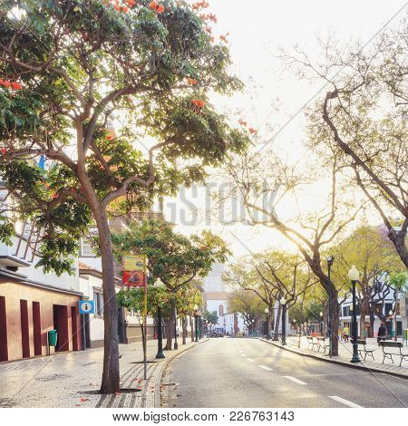 Sunny Central Street In Capital Of Madeira Funchal