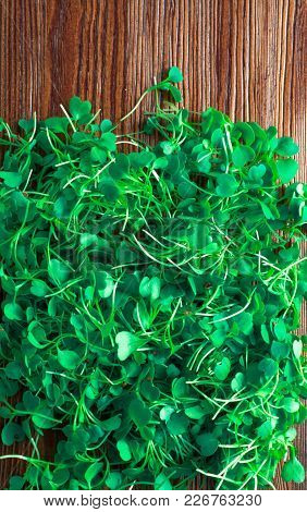 Micro Salat From Sprouts Of Radish And Arugula