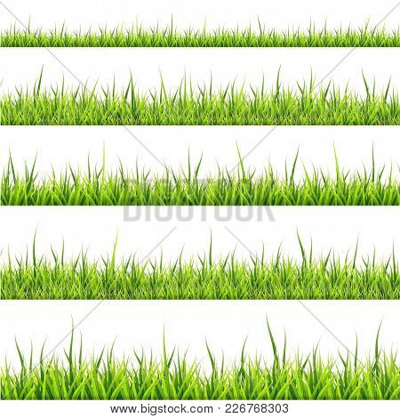 Grass Border Collection. Vector Illustration On White Background. Horizontal Panorama.