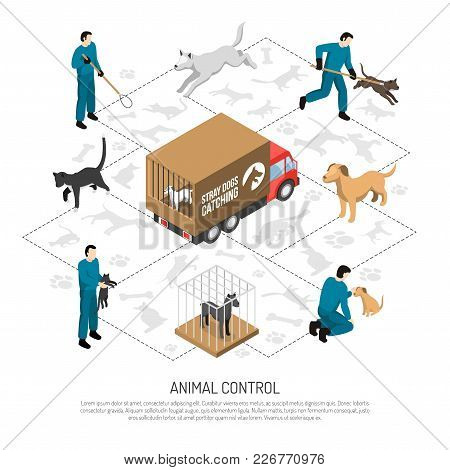 Animal Control Agency Service Isometric Poster With Officers Catching And Transporting Dogs Cats To