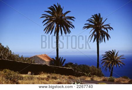 Palm Group Sea View