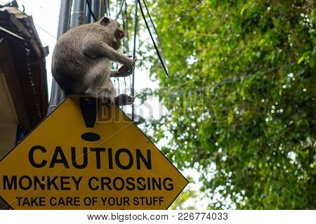 Road Sign In Asia With Monkey Sitting On It. Written Text Caution. Monkey Crossing. Take Care Of You