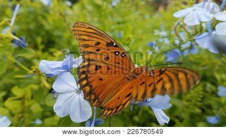 A Gorgeous Butterfly Resting Near Some Flowers.