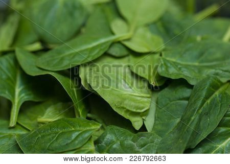 Fresh Green Spinach Leaves As Background Close Up. Food Ingredients.