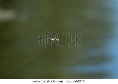 Photo Of A Dragon Fly Hovering Over Water