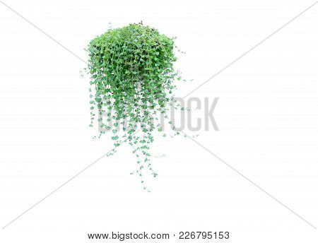 Green Potted Plant In The Pot Isolated On White Background.
