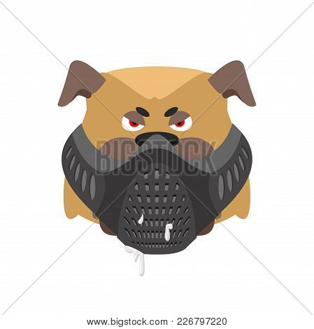 Angry Dog In Muzzle. Evil Bulldog Wearing Mask. Home Pet Aggressive