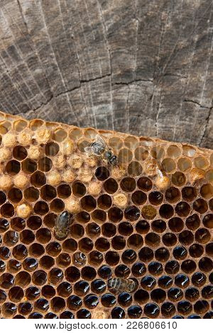 Close Up View Of The Working Bee On The Honeycomb With Sweet Honey..