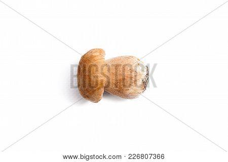 Single Porcini Mushroom Known As Boletus Edulis Isolated On White Background.