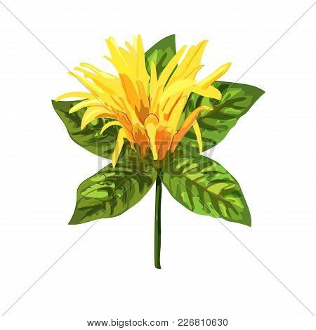 Yellow Tropical Plant. Mexican Honeysuckle, Orange Plume Flower. Collection With Hand Drawn Flowers