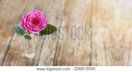 Web Banner Of Pink Rose Flower On Wooden Background With Blank, Copy Space -  Life Coaching Concept