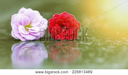 Springtime, Spring Concept - Web Banner Of Pink And Red Flowers